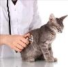 Ветеринарные клиники в Смидовиче